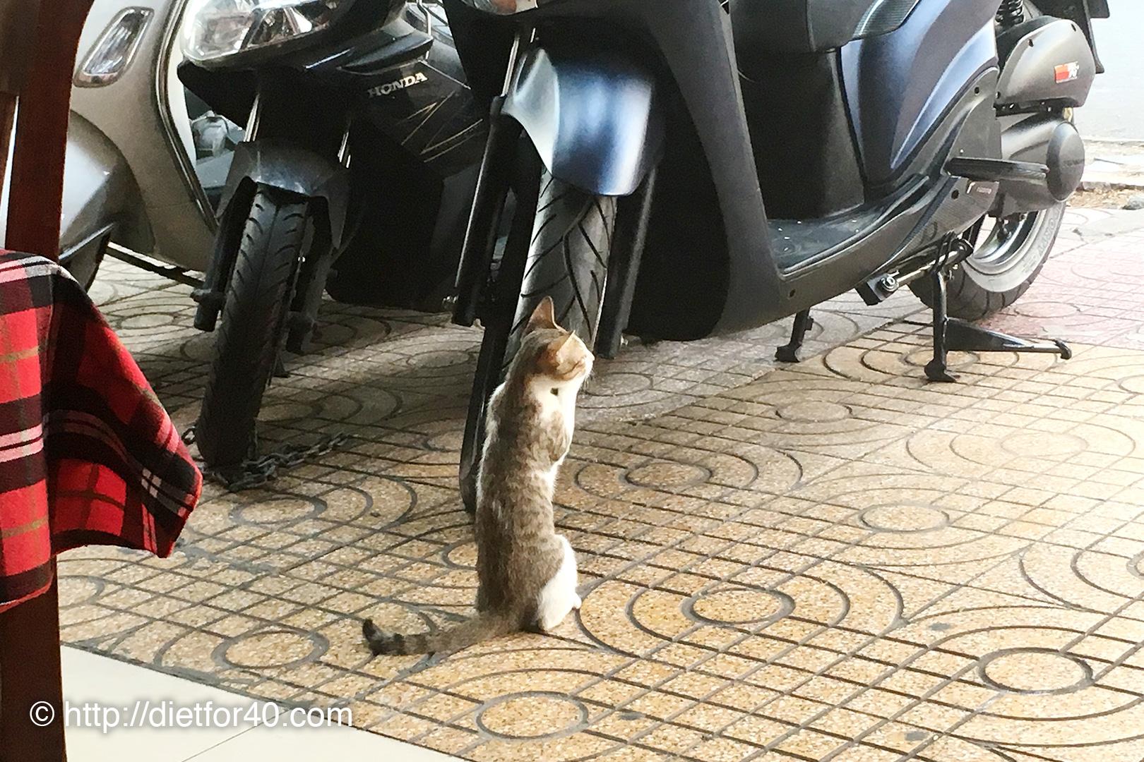 歩道に駐輪されているバイクで爪とぎをするSASA CAFEの猫